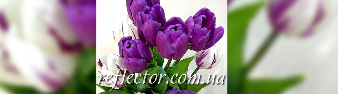 весенние тюльпаны поздравляем с 8 Марта